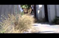 """Freeway & The Jacka Feat. Freddie Gibbs & Jynx """"Cherry Pie"""""""