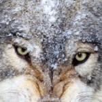 Zdjęcie profilowe poganiacz