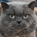 Zdjęcie profilowe bazyl
